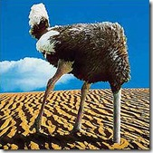 Ostrich in sand zolierdos